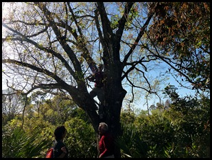 Dan up a tree 2