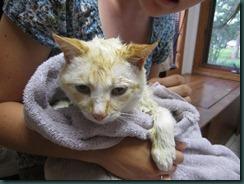 Cat Wash 056