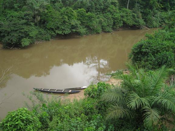 Vers Ankasa : La Tanoé à Fawmang. Ghana, 22 décembre 2009. Photo : Henrik Bloch