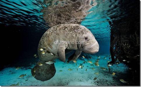 imagens Submarinas (5)