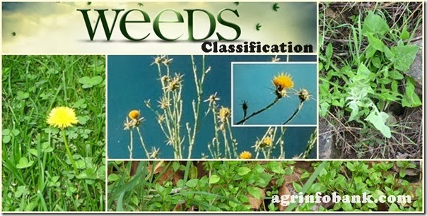 Weeds Classification