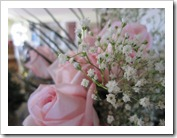 20120105_roses_004