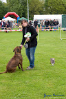 20100513-Bullmastiff-Clubmatch_31118.jpg