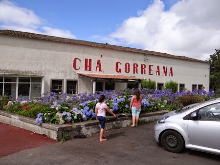 22. Fabrica de ceai Cha Gorreana.JPG