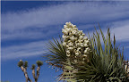 Springflowers in Joshua Tree National Park, (photo by Rick Parker<br /> (Pic property of Harmony Motel)