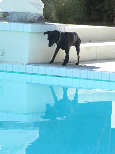Supervised pool time can be great fun for canine's and a welcome way to cool off.