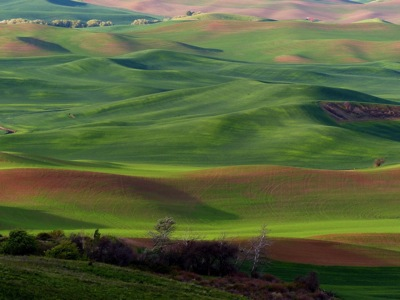 12 The Palouse 018