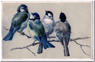 birdsonbranch.gf