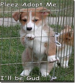 Plz-adopt-me (Small)