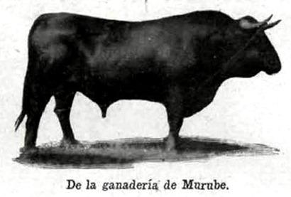 Toro de Murube