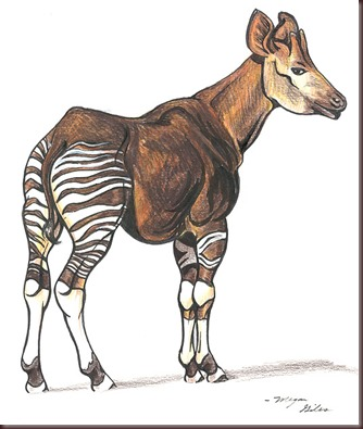 Amazing Animal Pictures Okapi (6)