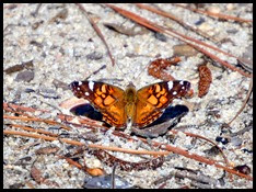 11b - Moth