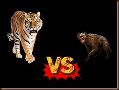 ! tiger vs hyena