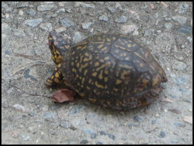 turtle 4_thumb[2]