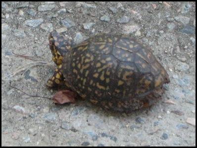 turtle 4_thumb[2]