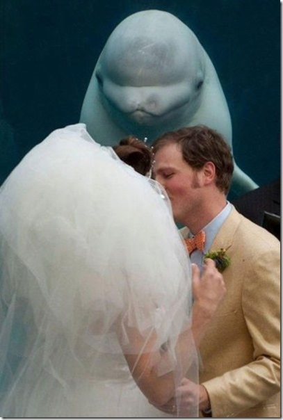 perfect-wedding-photo-9