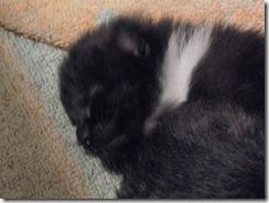 kittens 1 week 03