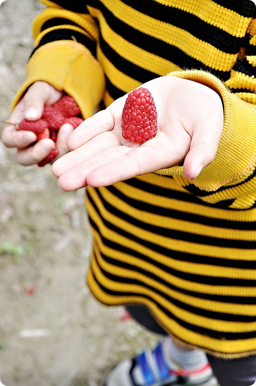 Giant-raspberry