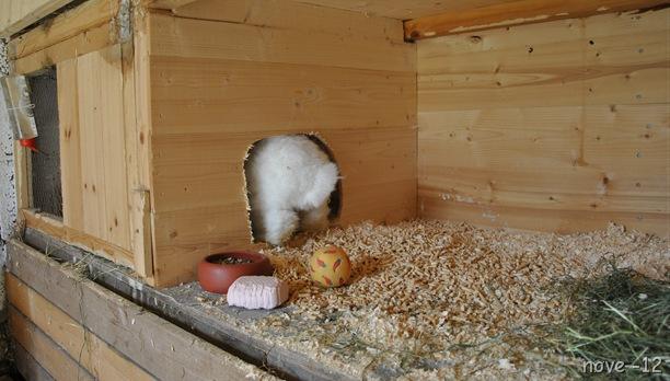 kaninene 028