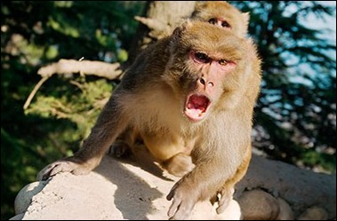 This Monkey is not Happy