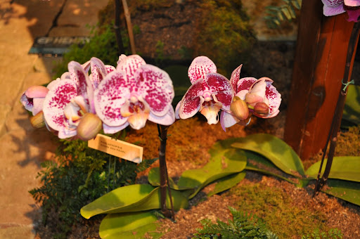 Orchids!
