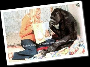 Koko et livre