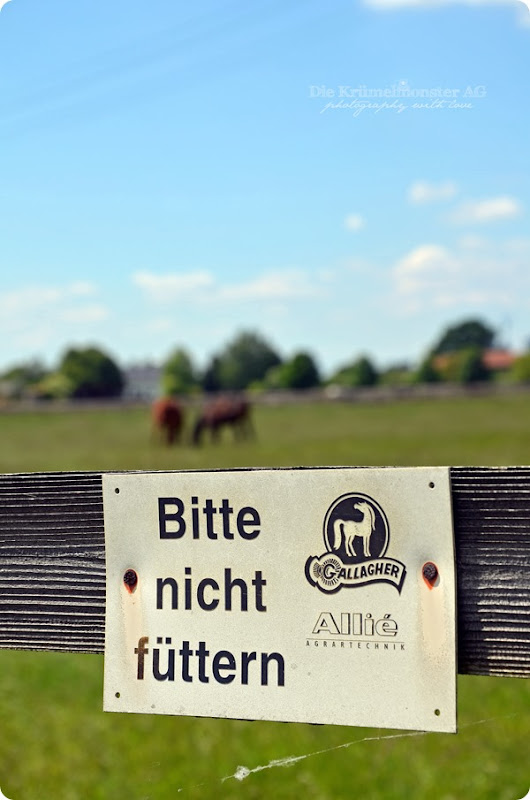 Hunderunde (13) Erdbeerfeld 16052014
