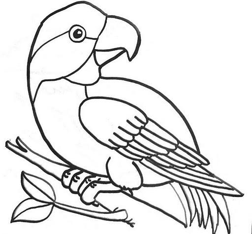 Dibujos de aves exóticas para colorear - Imagui
