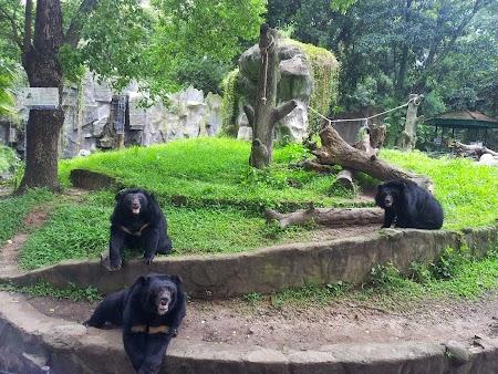 06. Zoo.jpg