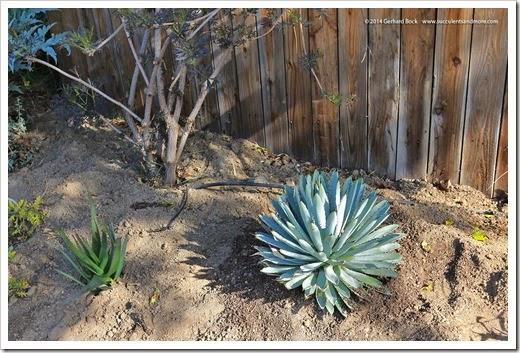 140316_desert_garden_planting1