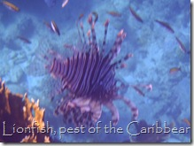 Lionfish, Southwater Cay
