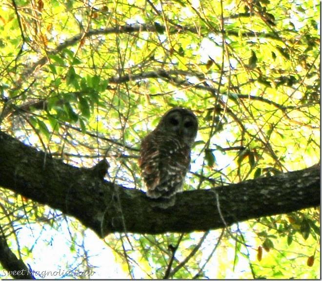 owl1 blog