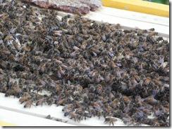 hive tour 02