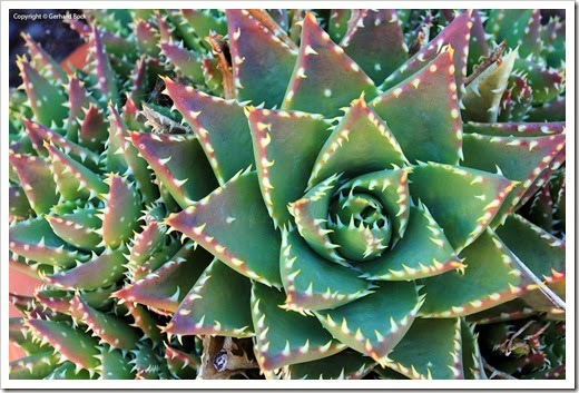 130928_SucculentExtravaganza_42_thumb