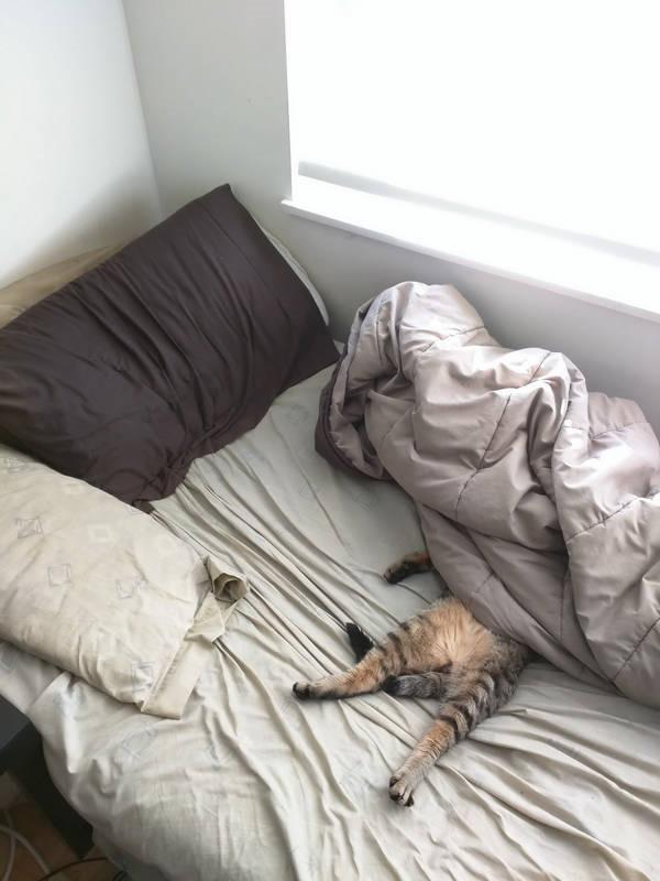 Os gatos não são muito bons em esconde-esconde 17