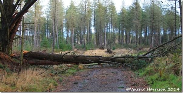 6-fallen-trees