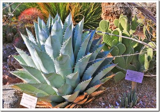 131203_TucsonBotanicalGarden_073