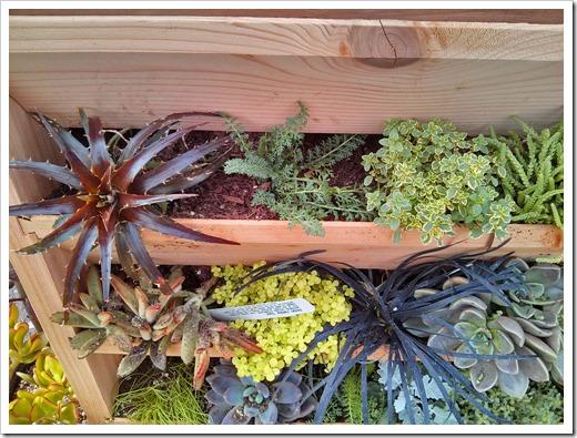 130315_GreenAcresFolsom_vertical-garden