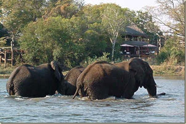 VFA-Sussi-Lodge-Eles
