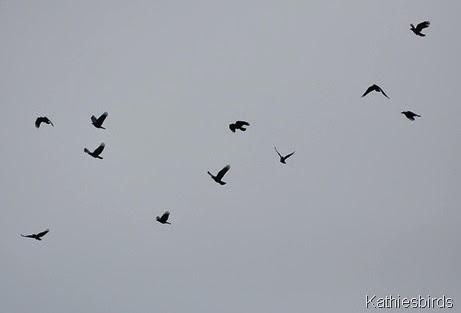 10. crows-kab