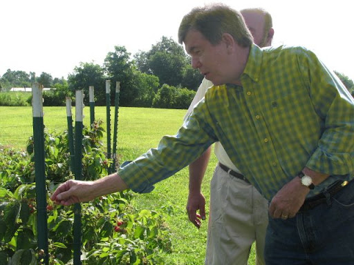 Blunt reaches to sample one of Overboe's red raspberries. (Photo credit: Jennifer Moore)