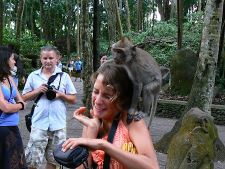 What to do in Bali: play with monkeys