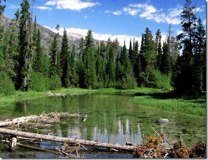 Outlet of Phelps Lake into Lake Creek
