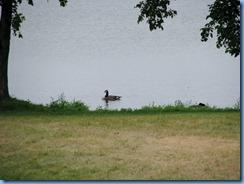 2614 Minnesota Bemidji - Lake Bemidji - Canada Goose