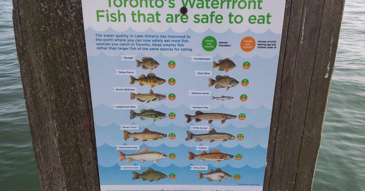 Project gridless ontario fish safe to eat for Safest fish to eat