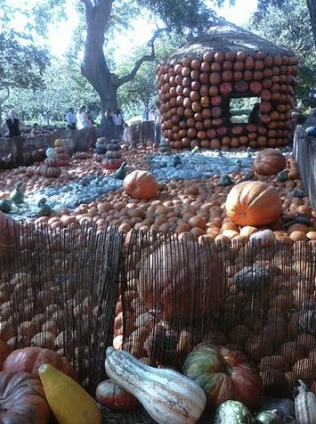 cinderella pumpkin village