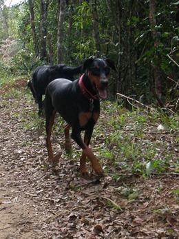 Dogs Trekking 4 (125)