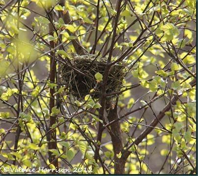 32-tiny-nest