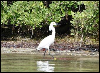 08- Snowy Egret