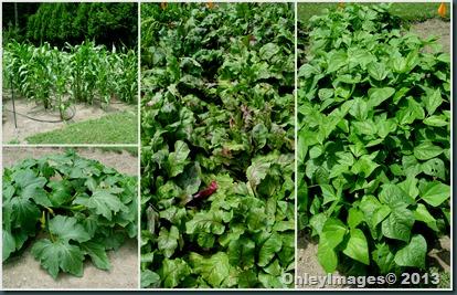 veggie output